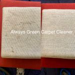 Always Green Carpet Cleaner NYC profile image.