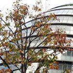 South London Tree Surgeons profile image.