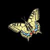 Swallowtail Promotional Ltd profile image