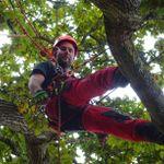 UK Special Arborist Service profile image.