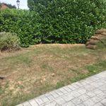Hollys garden maintenance profile image.