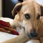 Peticular Charm Pet Care profile image.