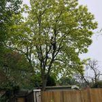 Treescape profile image.