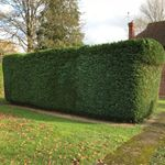Dave Jones and sons Tree care profile image.
