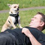 theukdogwhisperer.com profile image.