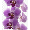 Orchid Cleaning Services profile image