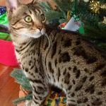 Petguardiansitter.com profile image.