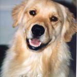 VP Dog Training profile image.
