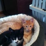 SNR Pet Care profile image.