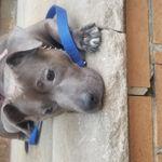 Sugarhill Pups profile image.