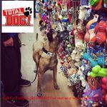 Total Dog! Las Vegas profile image.
