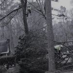 770-Tree-Guy profile image.