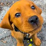 Bee's Dog Services profile image.