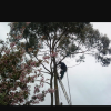 A P  TREE  Services profile image