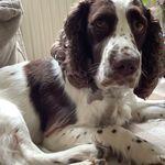 Paws of Ludlow Dog walking profile image.