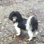 JENNY the PET NANNY profile image.