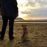 Captains Crew Dog Walking and Pet Services profile image.