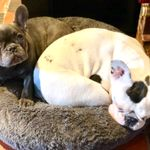 K-Exotics Pet Care profile image.