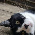 Premier Pet Care & Training profile image.