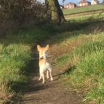 Claire the dog walker and pet services  profile image.