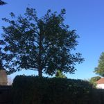 Redesign Landscapes & Tree Care  profile image.