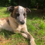 Heritage Pet Services profile image.