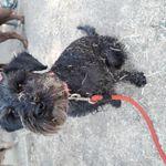 Walk-my.dog profile image.