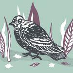 Jade Moore Illustration profile image.