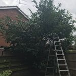 Appletree landscaping profile image.