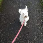 Muttley's Pack Pet Services  profile image.