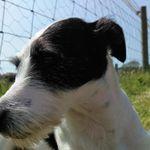 The Melling Dog Walker profile image.
