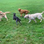 Pointy Nose Dog Walking profile image.