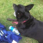 Daley's Dog Walks profile image.