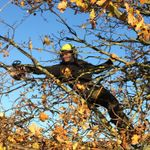 Norfolk Coastal Tree Care profile image.
