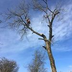 CR Tree Services profile image.