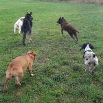 Twiggy's Dog Walking profile image.