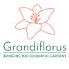 Grandiflorus profile image