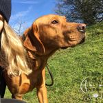 Woofs and Walks profile image.