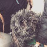 Woofie Walkies profile image.