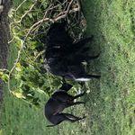 Paws Positive Dog Training profile image.