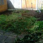 Redwood landscap design profile image.