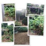 L.H.Gardenservices profile image.