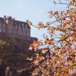Edinburgh Arborists Ltd profile image.