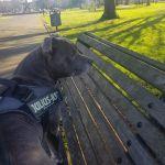 Muddy Paws Dog Walking & Pet Services profile image.