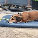 Hold'n On Dog Training profile image.