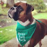 Bone Ball Bark profile image.