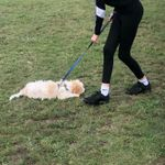 Lee valley dog training school  profile image.
