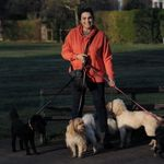 All About Dogs Cheshire profile image.