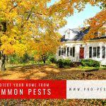 Pro Pest Corporation profile image.