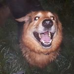 Hallam's Happy Hounds Training and Behaviour Co. profile image.